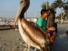 Poserende pelikaan part 4