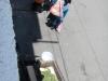 De eerste cavia's die ik spot op straat