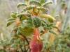 Een prikkelbaar plantje