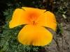 Eén van de vele bloemen uit de bloementuin