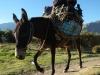 Een passerende ezel