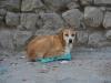Een hond die geniet van een eierkartonnetje
