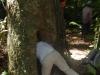 Marion bekijkt de vleermuizen in de holle boom