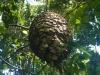 Een mierennest