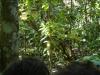 Zoek het wilde zwijn (tip: iets rechts van de boom zie je zijn neus)