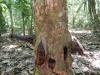 Dit is natuurlijk gewoon een boom...