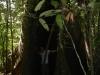 Jeroen en boom