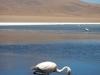 De eerste flamingo die we spotten