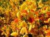 Close-up van de prachtige bloemen