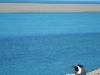 Meneer pinguin op de uitkijk, het nest wordt goed bewaakt