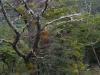 Bomen met verschillende kleuren