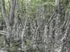 Bemosde bomen
