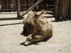 Stoffige oude ezel