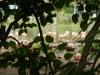 Doorkijkje naar de dierentuin