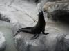 Deze zeehond heeft het beter begrepen,zo krijg je visjes!