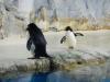 Deze pinguins ben ik in Ushuaia misgelopen