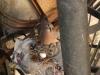 Een vogeltje met nest in ons hostel
