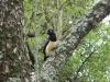 Bijzondere vogel die we elke dag vlakbij onze tent zien