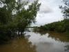 Begroeïng tot in de rivier, een paradijs voor dieren