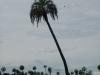 En palmbomen natuurlijk
