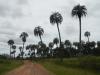Op weg naar het uitkijkpunt met de hoge palmbomen