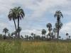 Overal palmbomen