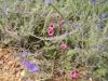 Bloemen die Renee mooi vind (ik ook wel hoor)