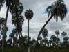 Renee tussen twee palmbomen