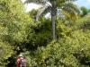 De palmbomen maken het plaatje steeds weer compleet