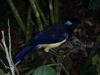 Eén van de bijzondere vogels