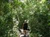 Junglepaadje naar het panoramapad