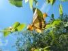 Mooie vlinder geniet van een bloempje op zijn weg