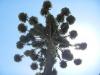Stijlvolle palmboom