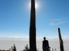 De langste cactus ooit